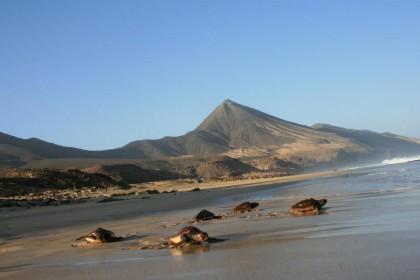 Cabo Verde, el hogar de las Tortugas Bobas, con Rosa Tristán