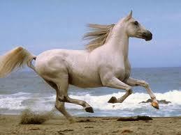 Hoy hablamos del mundo del caballo